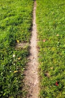 Un sentiero stretto che era stato calpestato in un campo di piante verdi