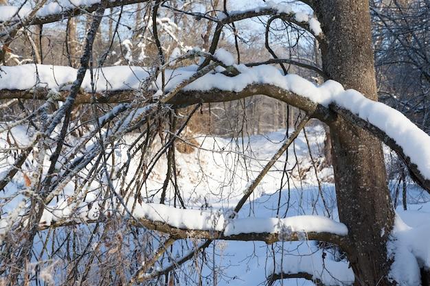 Un fiume stretto nella foresta in inverno