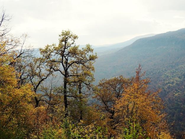 Sfondo naturale vista sullo sfondo dalla montagna alla foresta sottostante, la natura della russia.