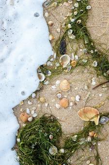 Sfondo naturale di diverse conchiglie e alghe sulla spiaggia di sabbia bagnata. vista dall'alto. cornice verticale
