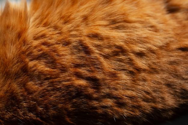 Sfondo naturale di pelliccia di gatto arancione.