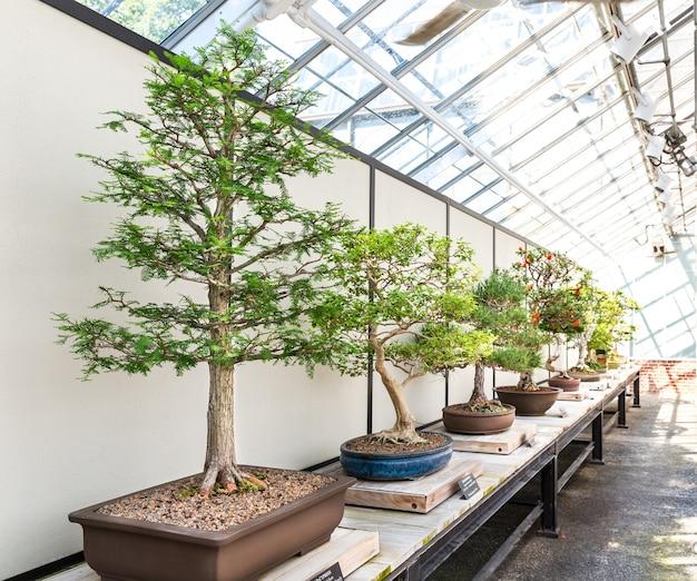 Set bonsai naturale