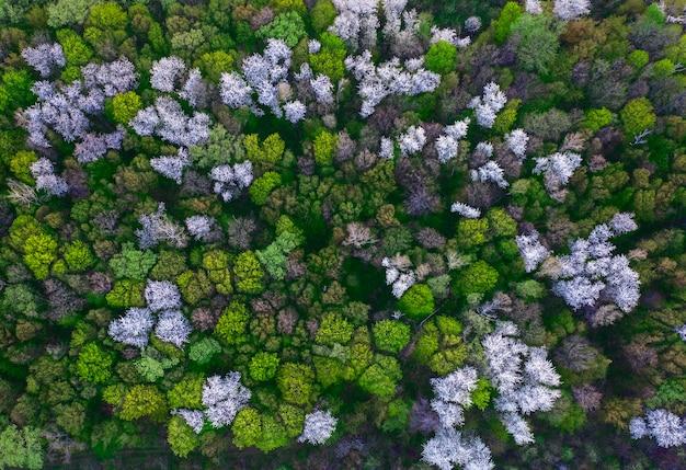 Sfondo scuro naturale o motivo. foresta di primavera con alberi da frutto in fiore. vista dall'alto.