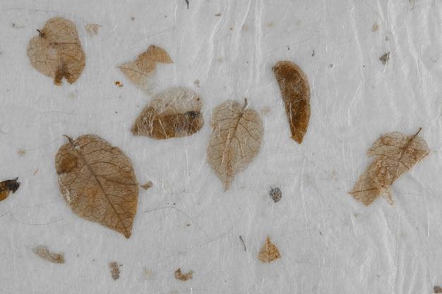 Struttura di carta di foglie secche naturali. carta fatta a mano.