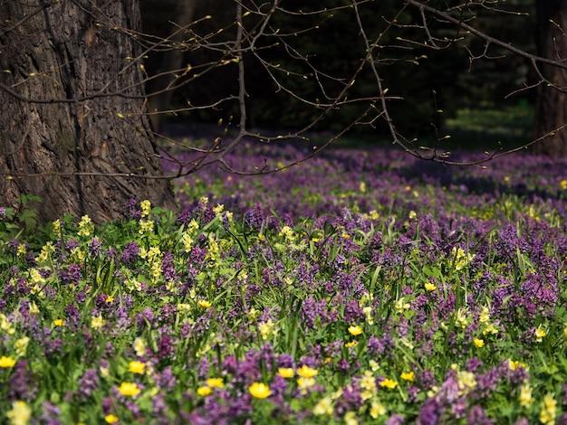 Verde naturale. fiori che sbocciano in primavera