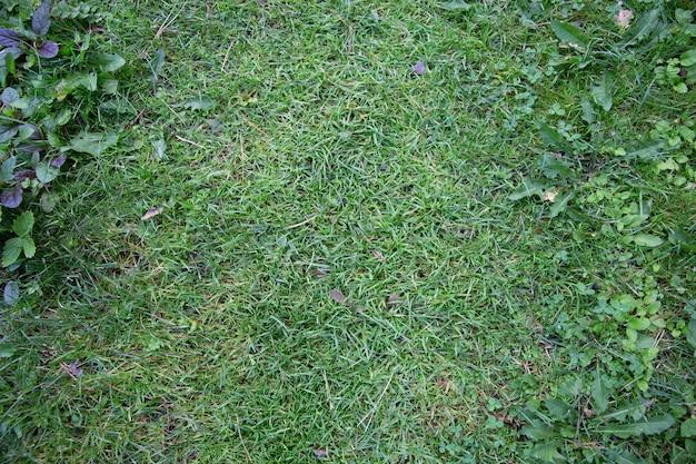 Naturale di erba verde