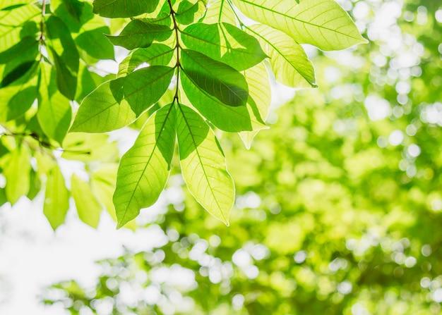 Sfondo verde foglia naturale