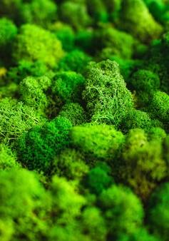 Muschio verde naturale macro shot texture di base vuota
