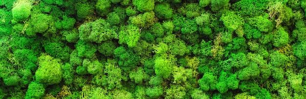 Vista dall'alto di muschio verde naturale