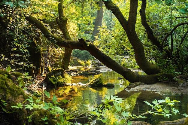Paesaggio naturale di un fiume di montagna nella giungla.turchia.