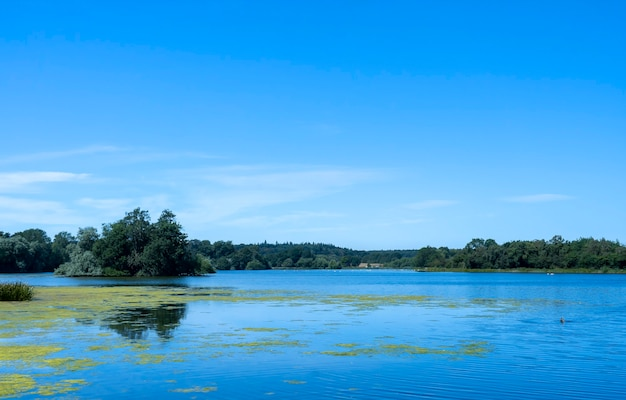 Vista del paesaggio naturale del lago e della foresta verde con il riflesso del cielo blu chiaro sull'acqua nella primavera del giorno soleggiato