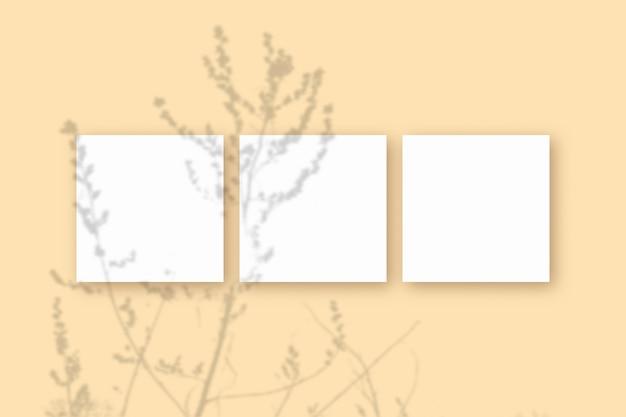 La luce naturale proietta le ombre dell'erba su 3 fogli quadrati di carta bianca strutturata che giace su uno sfondo blu