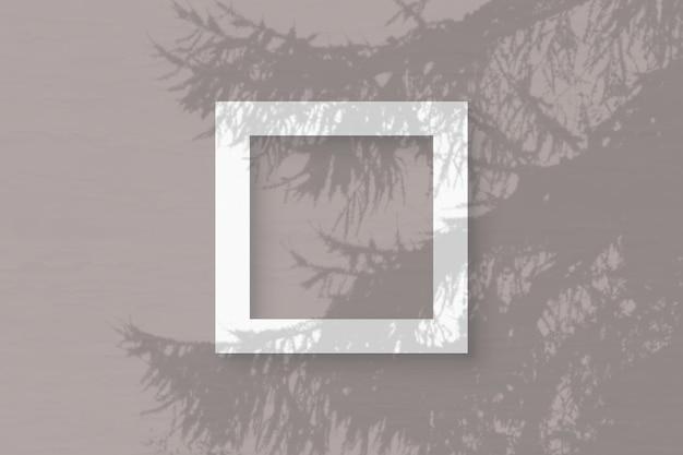 La luce naturale proietta ombre da un ramo di abete rosso su una cornice quadrata di carta bianca strutturata che giace su uno sfondo rosa