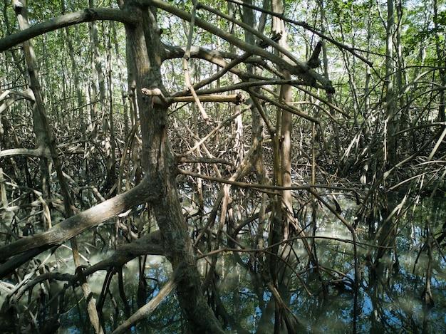 Vegetazione naturale di mangrovie con radici. Foto Premium