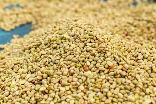 Chicchi di caffè verdi biologici naturali