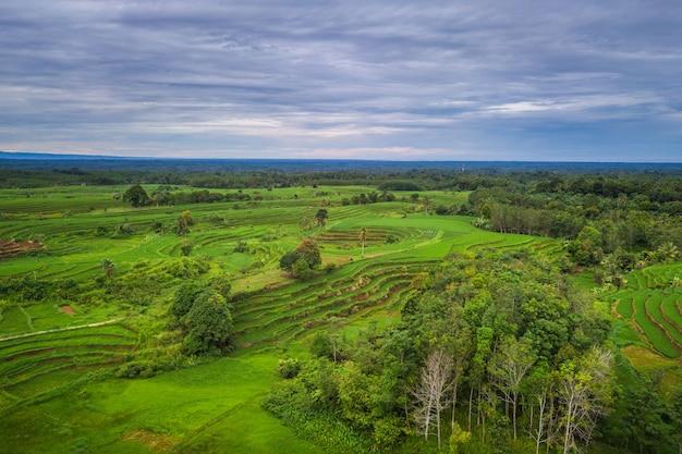 Panorama naturale della distesa di verdi risaie a bengkulu utara, indonesia