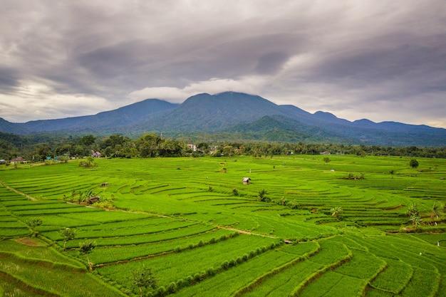 Panorama naturale della distesa di verdi risaie e foglie di montagna a bengkulu utara, indonesia