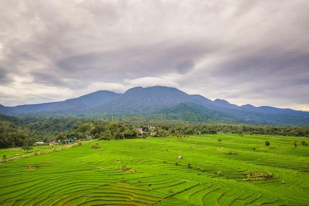 Vista panoramica naturale dei campi di riso con foglie di montagna a bengkulu utara, indonesia