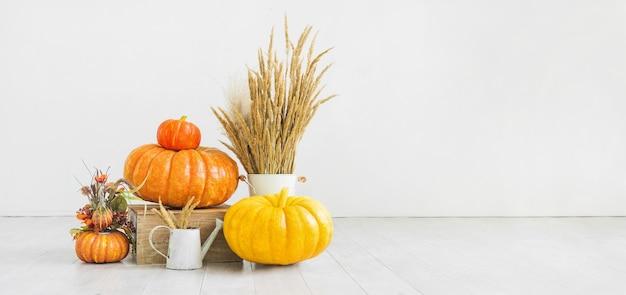 Zucche naturali, spighette secche in un vaso e annaffiatoio su uno sfondo bianco