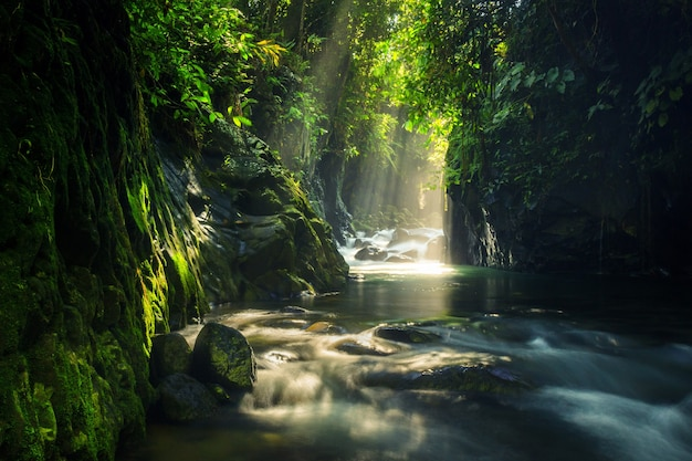 Scenario naturale della foresta tropicale con acqua corrente e paesaggio del sole mattutino