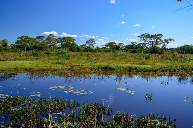 Scenario naturale della zona umida con campi di alberi e stagni in pocone mato grosso brazil