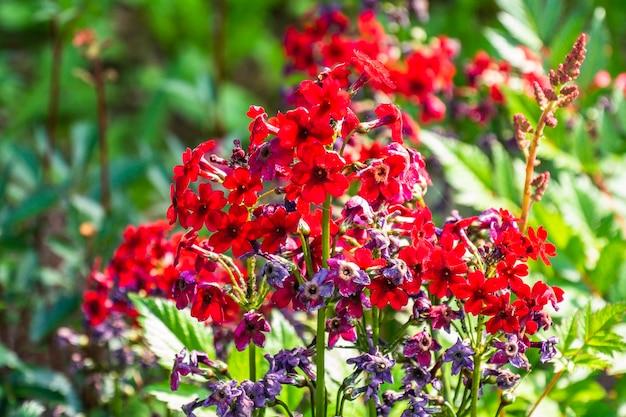 Sfondo naturale estate con bellissimi fiori colorati in erba.