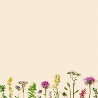 Composizione estiva naturale da fiori selvatici ed erba su prato beige pastello e fioritura della foresta