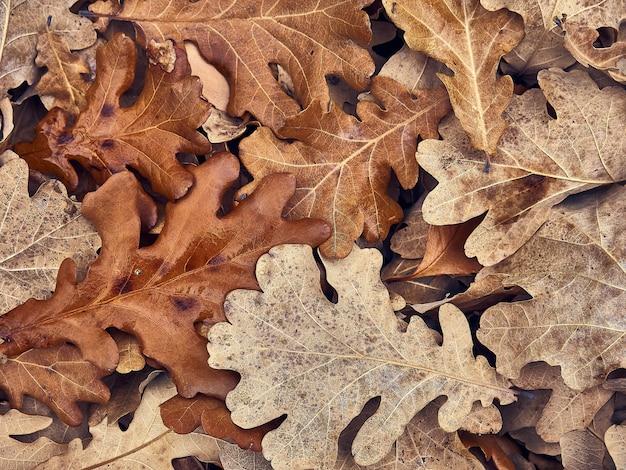 Consistenza naturale delle foglie secche.