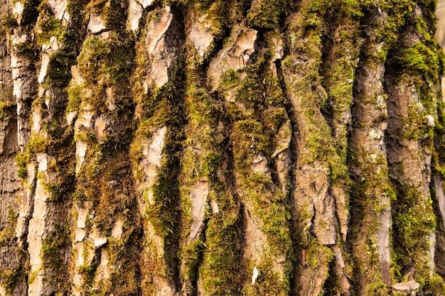 Naturale, consistenza della corteccia di quercia rossa.