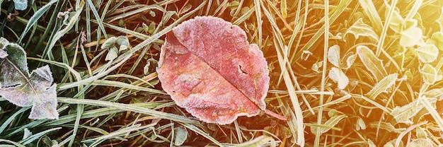 Fondo strutturato naturale con la singola foglia brutta caduta della mela rossa arancione in erba verde con i cristalli di gelo freddo bianco su una mattina gelida di inizio autunno. vista dall'alto. bandiera. bagliore