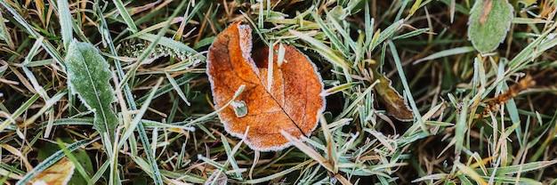 Fondo strutturato naturale con la singola foglia brutta caduta della mela arancione rossa in erba verde con i cristalli di gelo freddo bianco su una mattina gelida di inizio autunno. vista dall'alto. striscione