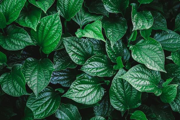 Muro naturale di foglie verdi