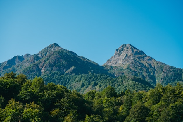 Paesaggio naturale della carta da parati con alte montagne e foreste contro un cielo blu