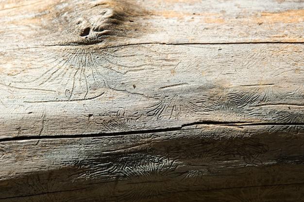 Struttura in legno naturale con linee disegnate da uno scarabeo di corteccia a forma di ragni. sfondo, scarabeo di corteccia, tronco d'albero