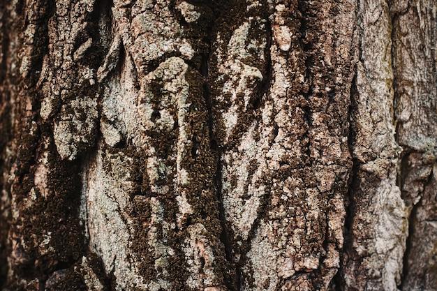 Primo piano della natura di struttura dell'albero di legno naturale