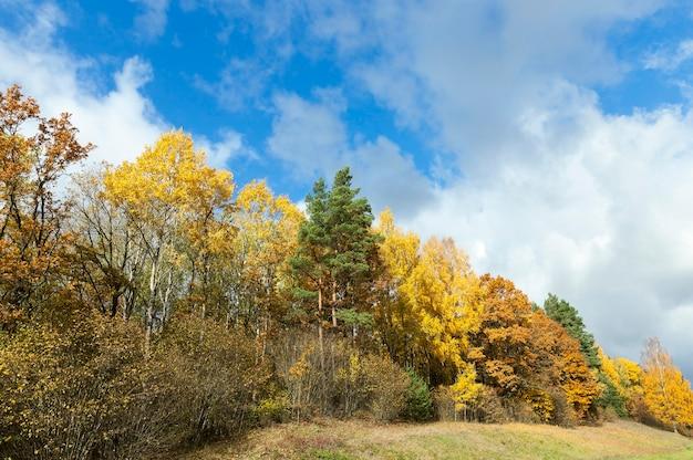 Natura nella stagione autunnale, alberi e natura nell'autunno dell'anno, vegetazione e alberi ingialliti