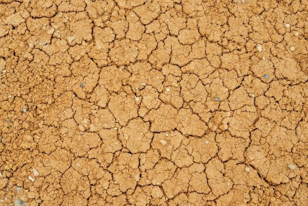 Sullo sfondo della natura delle terre aride incrinate.