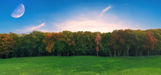 Sullo sfondo della natura, foresta. i raggi del sole sfondano la nebbia nella foresta mattutina estiva. freschezza, purezza e freschezza. il concetto.