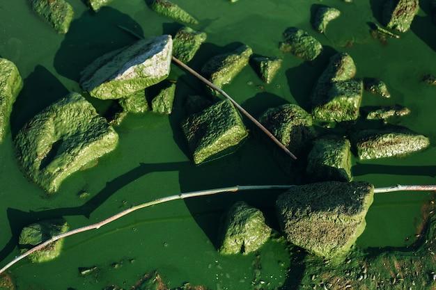 Sfondo della natura con acqua, pietre e fioriture di alghe nocive