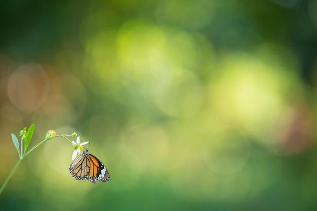Natura della farfalla e del fiore in giardino utilizzando come sfondo la pagina di copertina del giorno delle farfalle o il modello di banner brochure della pagina di destinazione della pagina di destinazione design