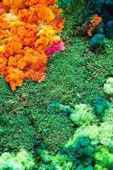 Natura sfondo colorato