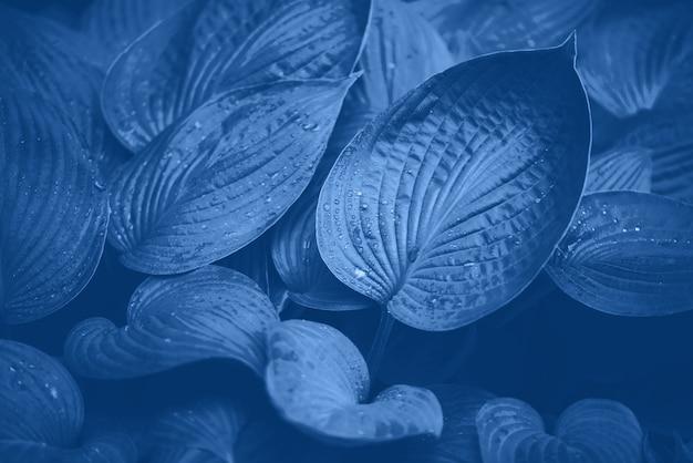 Concetto di natura. vista dall'alto. struttura delle foglie verdi nel colore monocromatico. colore blu e calmo alla moda. foglia tropicale sfondo.