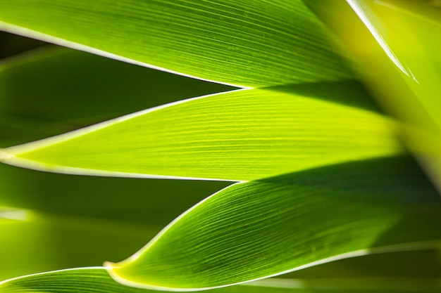 Sfondo verde natura con foglie in primavera scattate con obiettivo macro