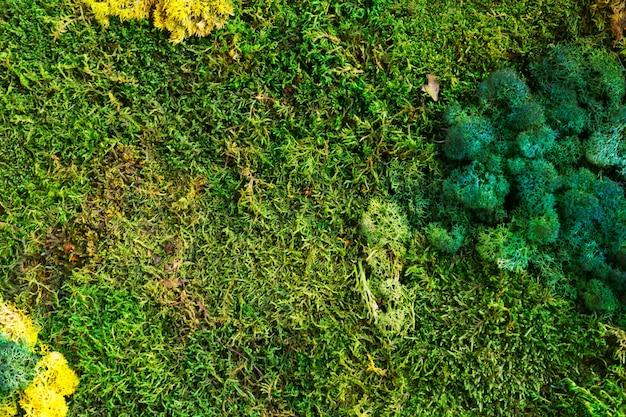 Natura sfondo verde
