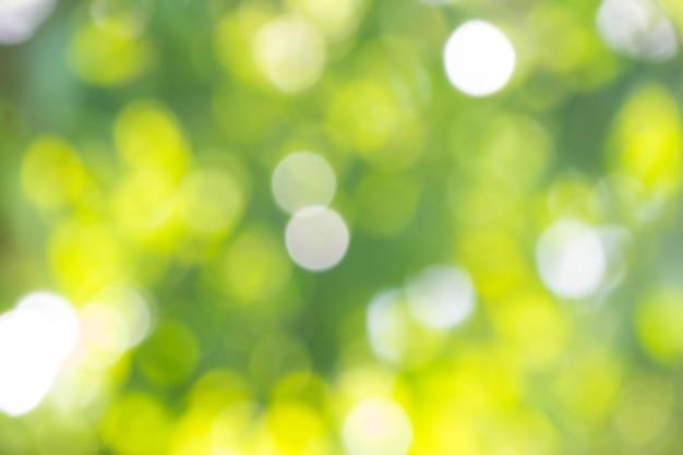 Sfondo bokeh verde natura