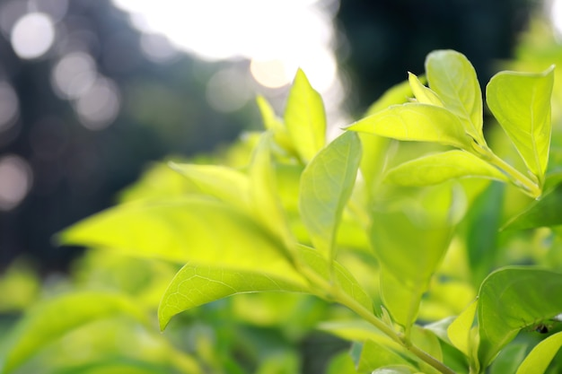 Natura della foglia verde in giardino