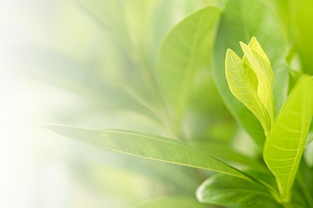 Foglia fresca dell'albero verde della natura su bella luce solare morbida vaga del bokeh primavera estate vintage