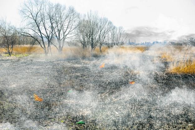 La natura è in fiamme. foreste bruciate. campo vuoto. disastro ecologico. fumare su terreno asciutto.