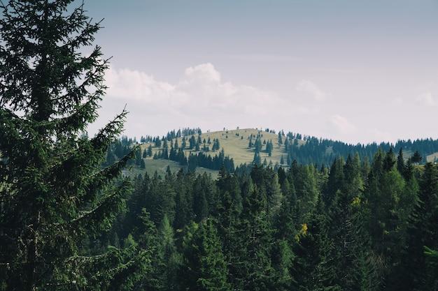 Paesaggio naturale foresta e montagne in estate veduta di velika planina slovenia