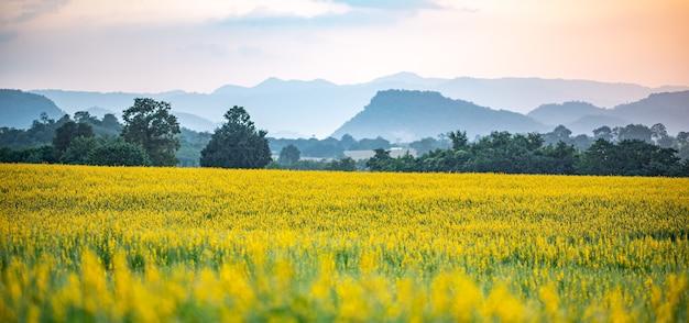 Paesaggio naturale prato all'aperto campo di fiori gialli in estate, bellissimo fiore verde erba pianta sfondo con cielo blu, campagna in primavera season